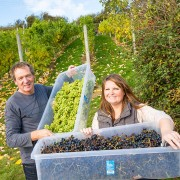 conwy_vineyard_harvest-wine_school_cheshire_chester